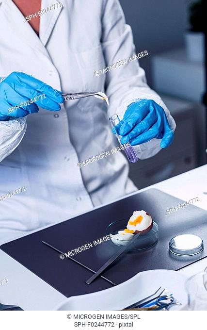 Quality control expert inspecting an egg in the laboratory