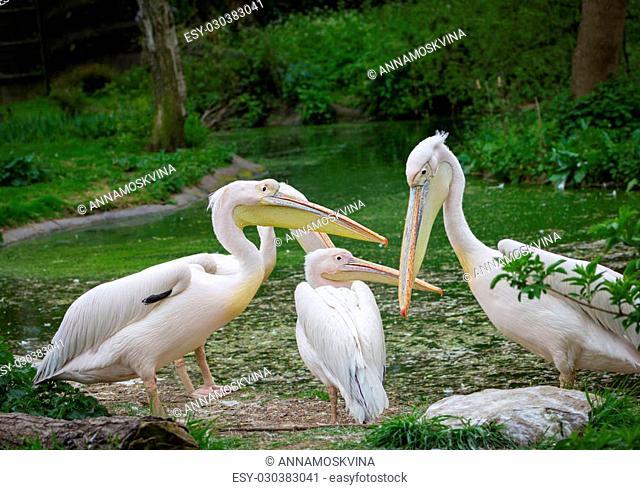 nice pelican feeding kids at the zoo