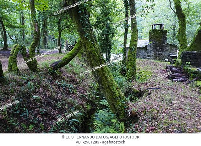 Shelter cabin at a dense Galician native forest by the river Sor. Ponte Segade, Lugo province, Galicia, Spain, Europe