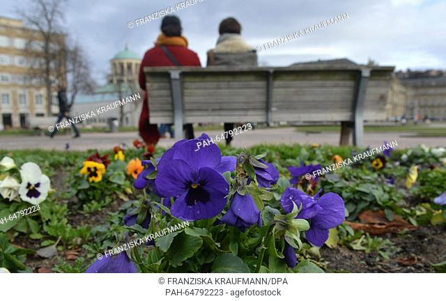 Blooming pansies grow in a park in Stuttgart, Germany, 04 January 2016. Photo: Franziska Kraufmann/dpa | usage worldwide
