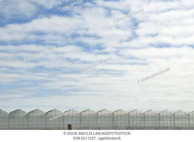 Greenhouses along a highway on the outskirts of Leamington, Ontario, Canada