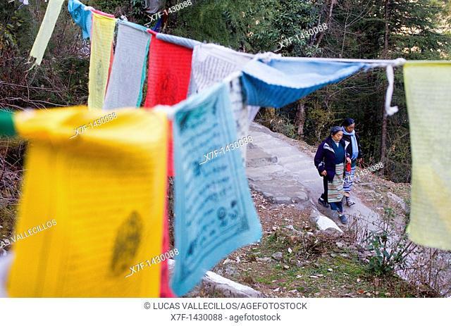 Tibetan prayer flags in Lhagyal Ri, near Tsuglagkhang complex,McLeod Ganj, Dharamsala, Himachal Pradesh state, India, Asia
