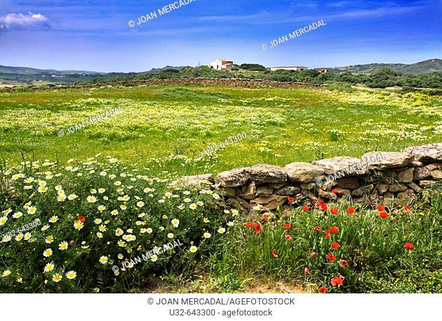 Spring. Minorca. Balearic Islands. Spain