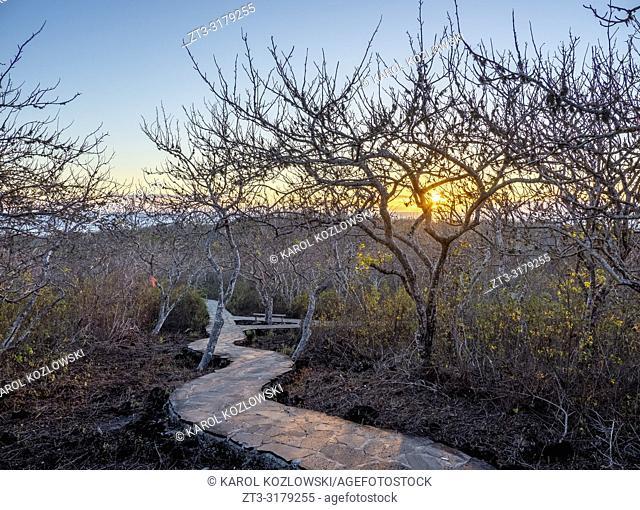 Trail to Cerro Tijeretas, San Cristobal or Chatham Island, Galapagos, Ecuador