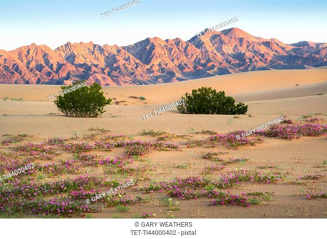 USA, California, Death Valley National Park, View of desert at sunrise