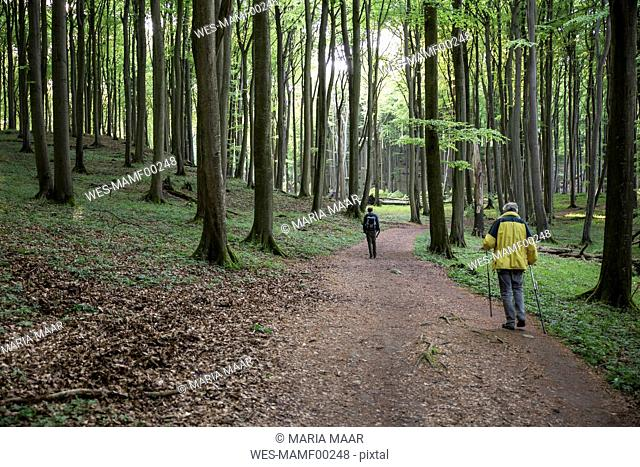 Germany, Mecklenburg-Western Pomerania, Ruegen, Jasmund National Park, hikers in beech forest on hiking trail