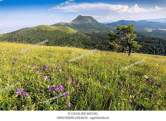 France, Puy de Dome, Parc Naturel Regional des Volcans d'Auvergne (Regional Natural reserve of the Volcanoes of Auvergne), Chain of Volcanic hills, Ceyssat
