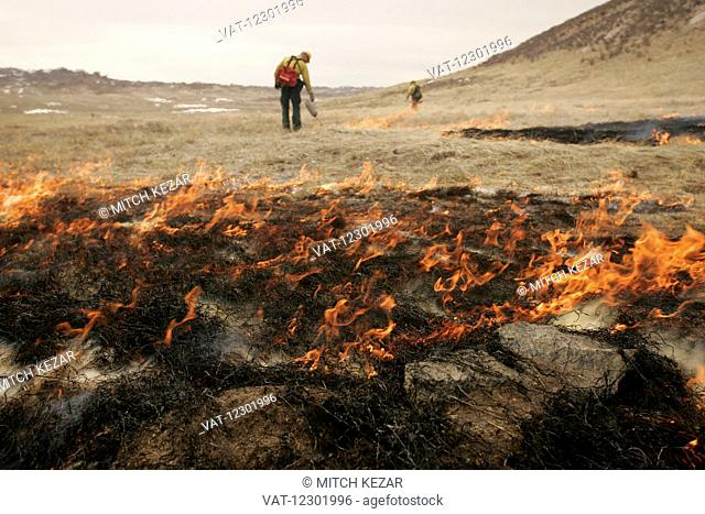Controlled Burn In Wildlife Management Area