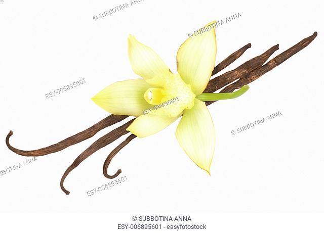 Vanilla Pods And Flower