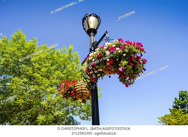 Lampost with two hanging baskets full of petunias