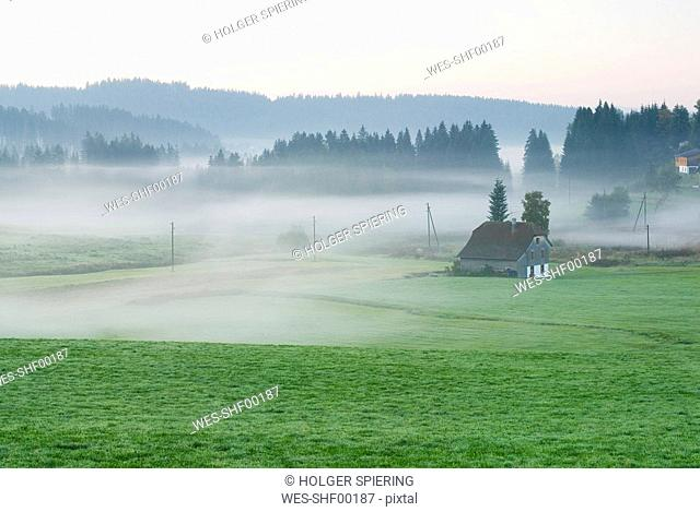 Germany, Black forest, Breitnau, Morning mist