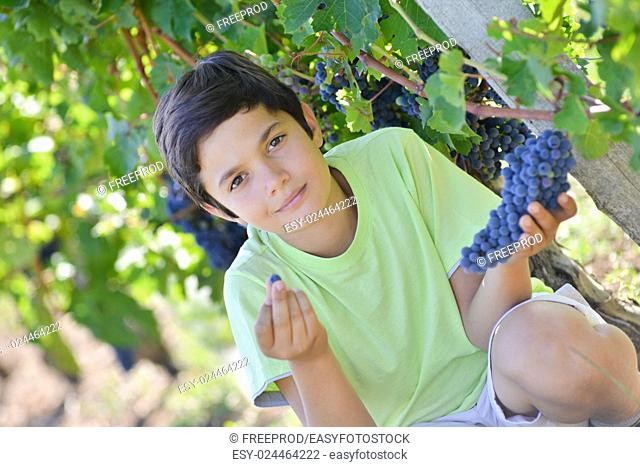 Teen in vineyard tasting red grapes with green leaves on the vine. fresh fruits
