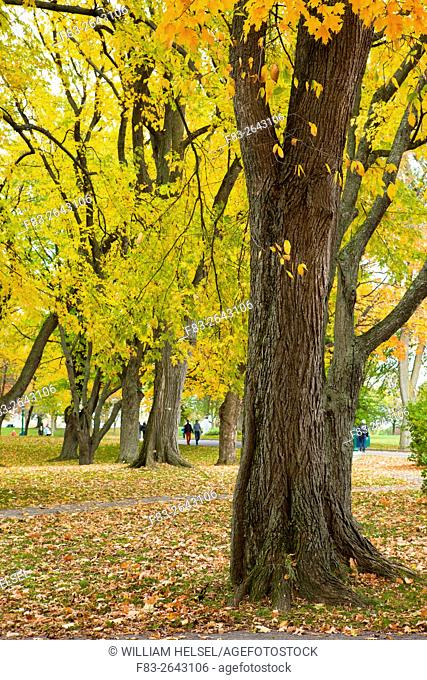 City park, Parc des Champs-de-Bataille, with people and maples in autumn, Quebec City, Quebec, Canada, October