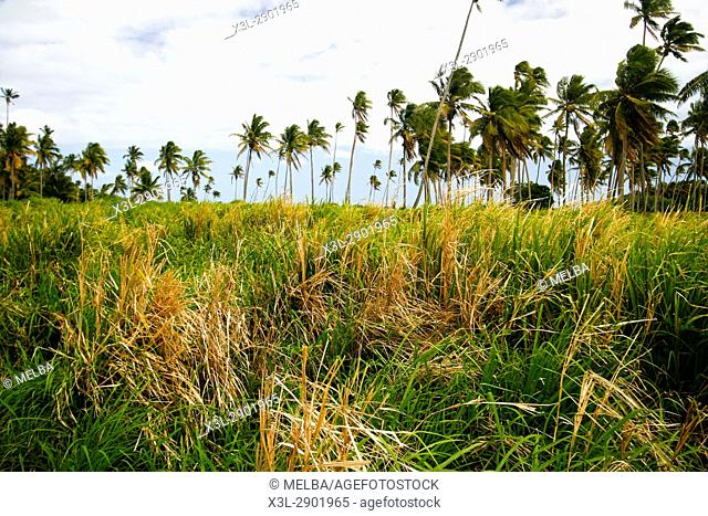 Lifuka island. ha'apai islands. Tonga. Polynesia