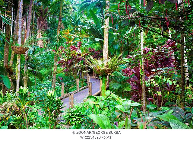 A trail through a beautiful exotic tropical foliage in Hawaii