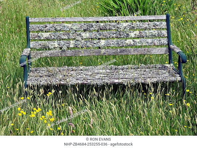 Cool Bench Garden Lichen Stock Photos And Images Age Fotostock Cjindustries Chair Design For Home Cjindustriesco