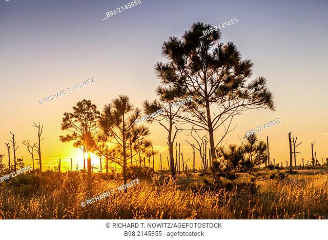Grass and weeds backlit at sunrise on Horn Island at Sunrise off the coast of Mississippi near Biloxi