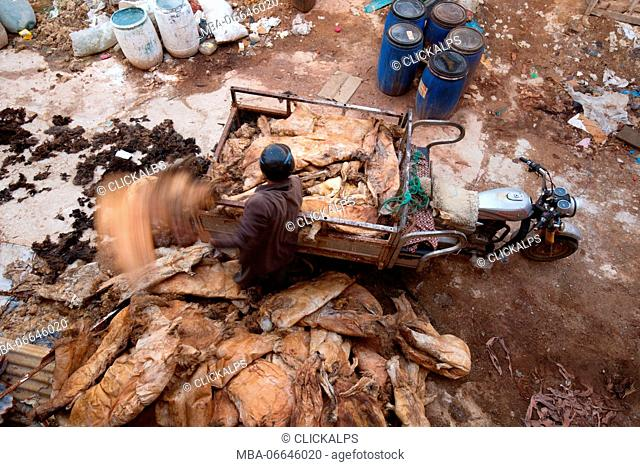 North Africa, Morocco, Fes district, Medina of Fes.Leather processing