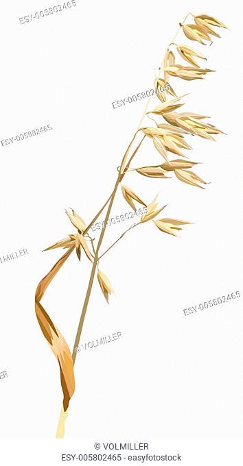 Vector oats