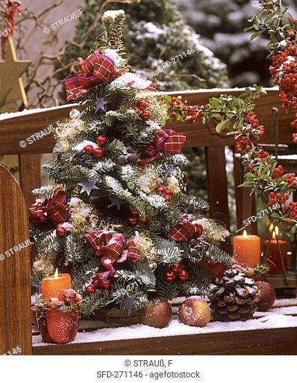 Mini-Christmas tree on garden bench