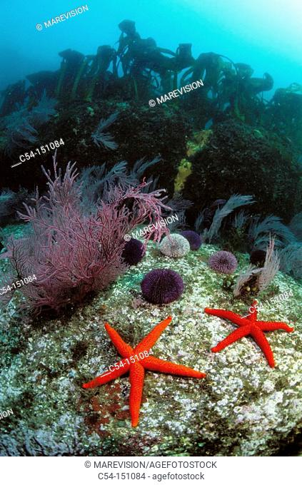 Underwater scenic. Galicia, Spain