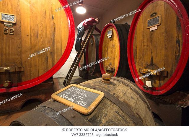 Man checks the casks in the cellar of herbal liquor Amaro Braulio, Bormio, Sondrio, Valtellina, Lombardy, Italy