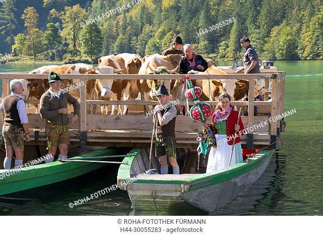 Bayern, Oberbayern, Brauch, Brauchtum, Berchtesgadener Land, Königsee, Koenigsee, Koenigssee, Königssee, Brauch, Brauchtum, Alm, Almabtrieb, heruntertreiben