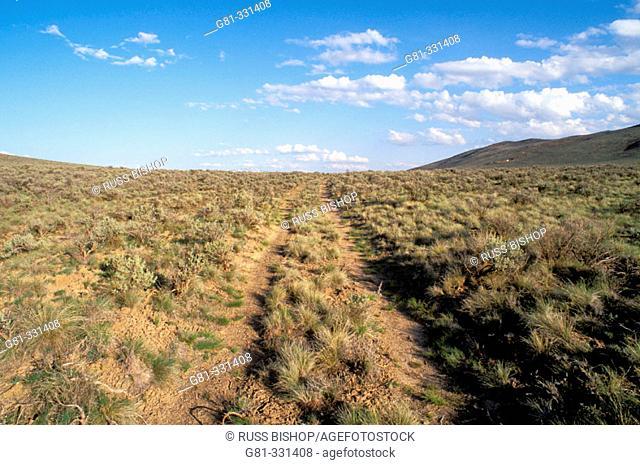 Oregon trail ruts along Highway 86 at Flagstaff Hill. Baker City. Oregon. USA