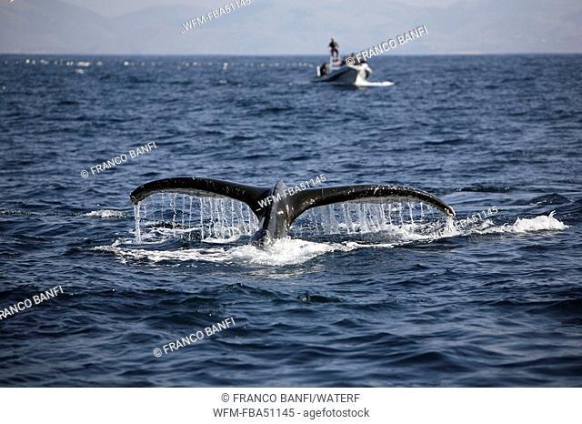 tourists watching humpback whale, Megaptera novaeangliae, Wild Coast, Transkei, Southeast Africa, Indian Ocean, Mozambique
