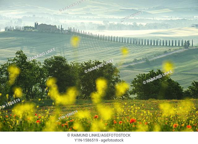 Landscape with farmhouse at morning, Castiglione d' orcia, Val d' Orcia, Tuscany, Italy