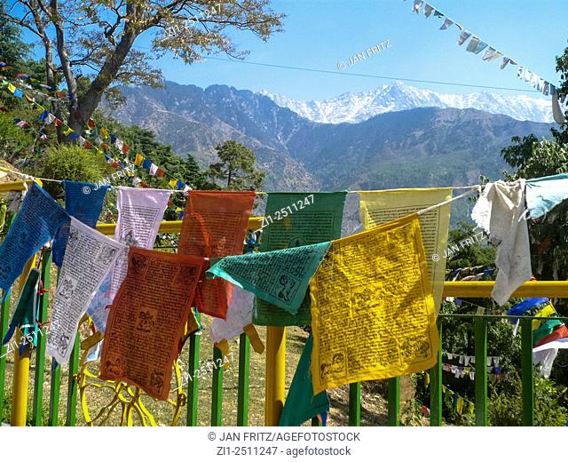 colourful praying flags and snow topped mountains at tsuglagkhang monastery in dharamsala, india