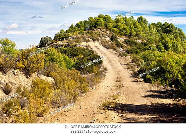 Road in Rincon hills in La Alcarria. Guadalajara. Castilla la Mancha. Spain. Europe