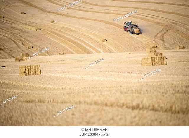 Tractor baler making straw bales in fields after summer wheat harvest on farm