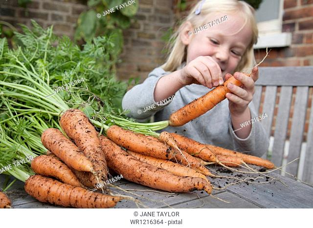 A child inspecting freshly picked carrots with mud on them