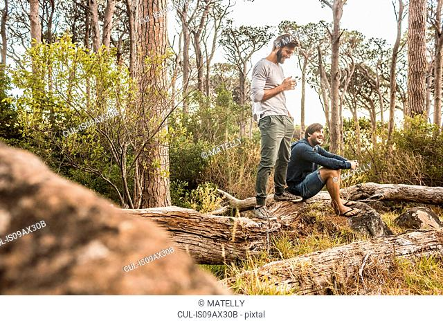 Two men drinking coffee on fallen tree in forest, Deer Park, Cape Town, South Africa