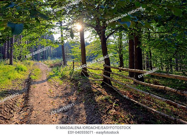 Wooden fence in the summer forest