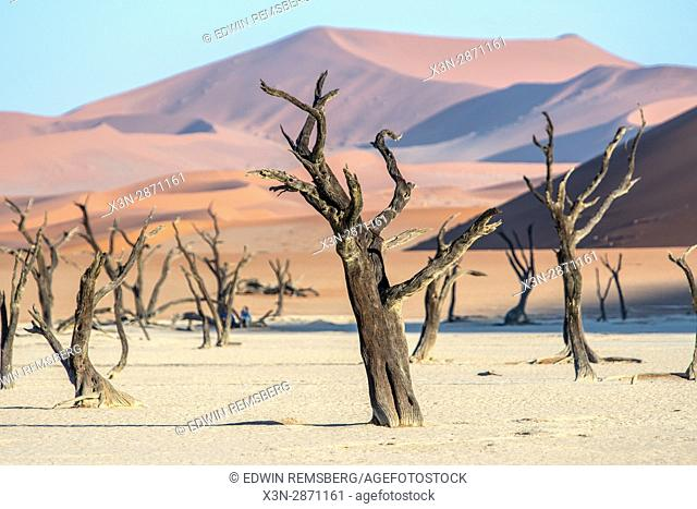 Dead acacia trees line the base of an ancient dune in the Deadvlei clay pan in Namib-Naukluft National Park, located in Namibia, Africa