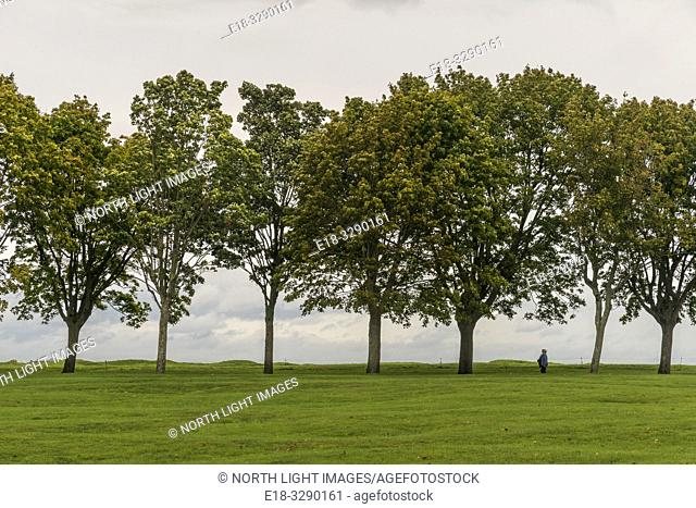 France, Arras, Vimy Ridge Memorial. A line of trees on the ridge of the hill at this WWI memorial. The main combatants were four divisions of the Canadian Corps