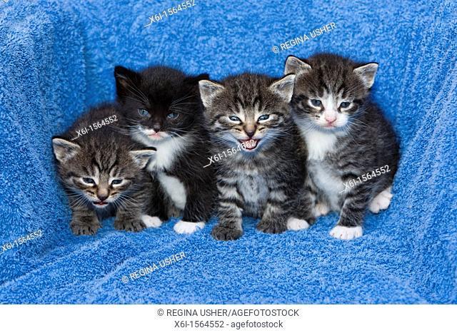 Baby Kittens, Lower Saxony, Germany