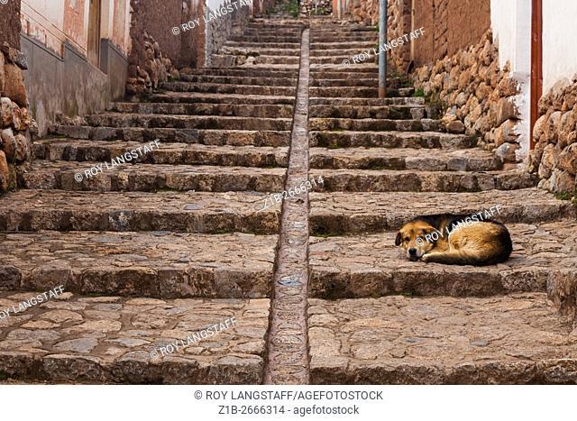 A sleeping dog on a street in Chinchero, Peru