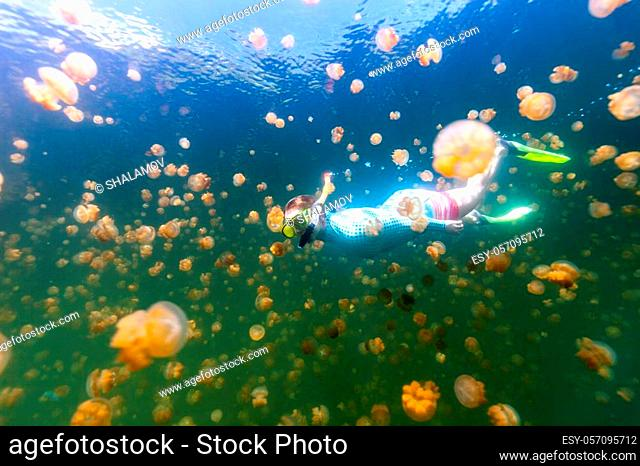 Underwater photo of tourist woman snorkeling with endemic golden jellyfish in lake at Palau. Snorkeling in Jellyfish Lake is a popular activity for tourists to...