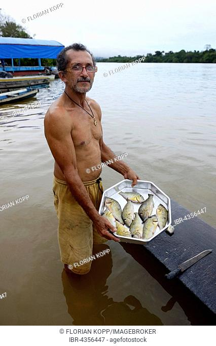 Fisherman with small catch, Piranhas (Serrasalmidae) Pimental, district Itaituba, Pará state, Brazil