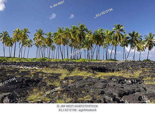 Honaunau, Hawaii - Palm trees at Pu'uhonua o Honaunau National Historical Park