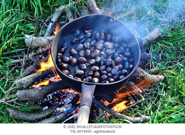 Grilling chestnuts on a wood fire (Mayenne, Loire country, France)
