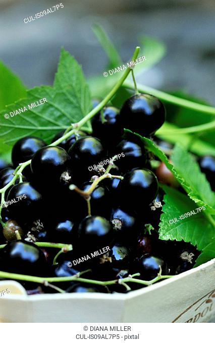 Blackcurrants in wooden box, close-up