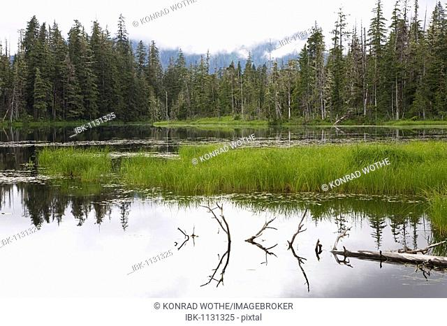 Crane Lake near Petersburg, Tongass National Forest, Mitkof Island, Southeast-Alaska, Alaska, USA, North America