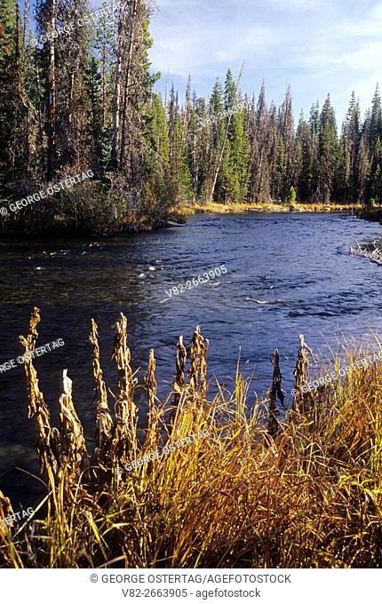 Deschutes River at Miles Camp, Cascade Lakes National Scenic Byway, Deschutes National Forest, Oregon