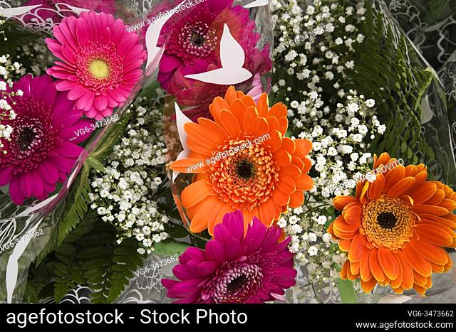 Close-up of freshly cut purple, orange and pink Gerbera flower bouquets for sale at an outdoor market in spring
