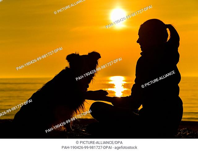 20 April 2019, Denmark, Klitmöller: A girl with a dog of the breed Border Collie in the sunset at the North Sea beach at the west coast