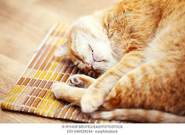 Peaceful Orange Red Tabby Cat Male Kitten Curled Up Sleeping In His Bed On Laminate Floor